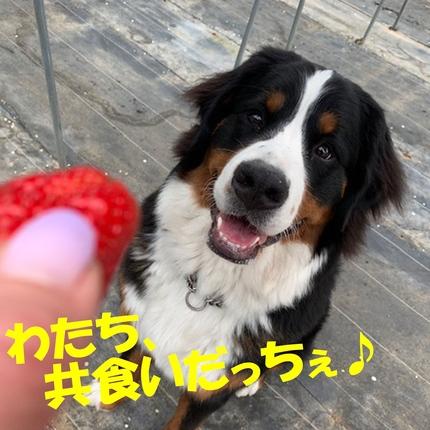 1ichigo1.jpg