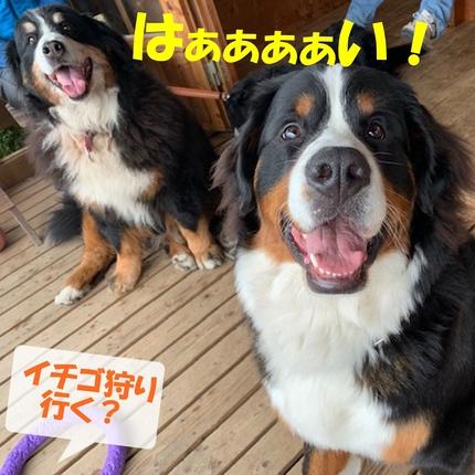 2ichigo2.jpg