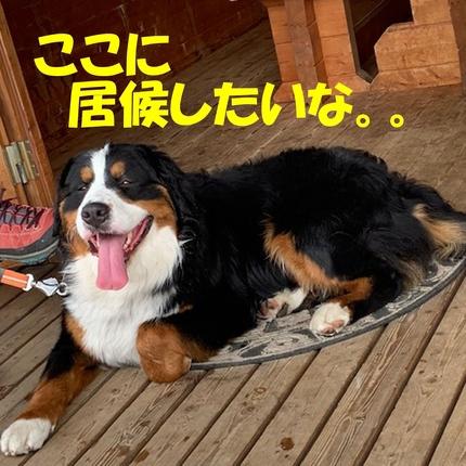 4ichigo4.jpg