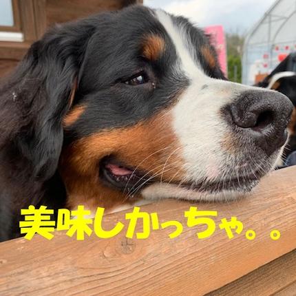 6ichigo6.jpg