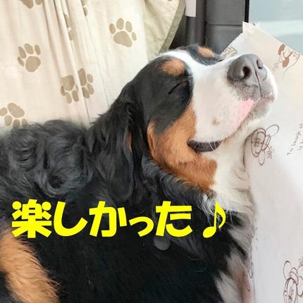 8ichigo8.jpg