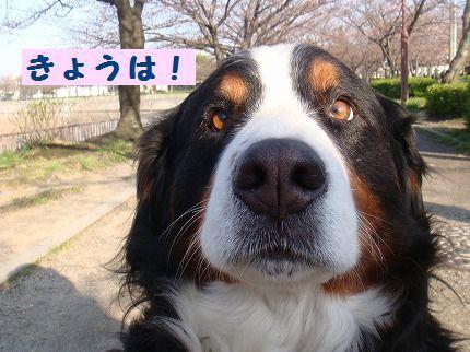 kyouwa.jpg