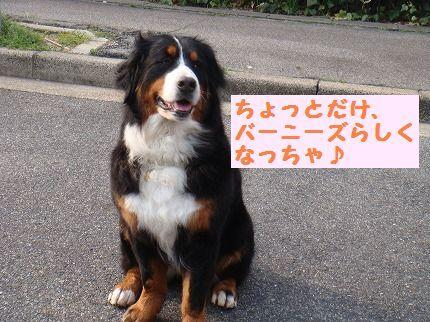 banirashi.jpg