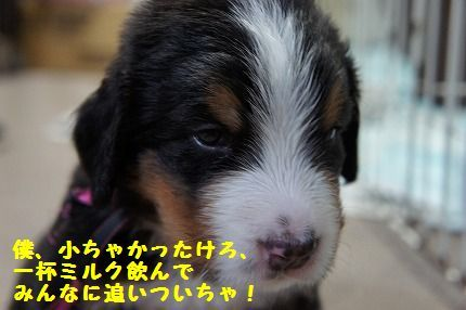 bokuchii.jpg