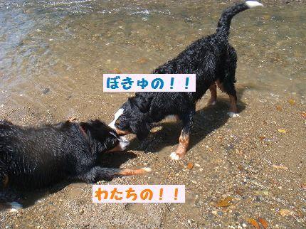 bokuwata.jpg