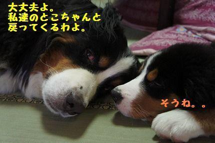 daijyo.jpg