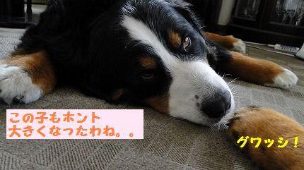 guwashi.jpg