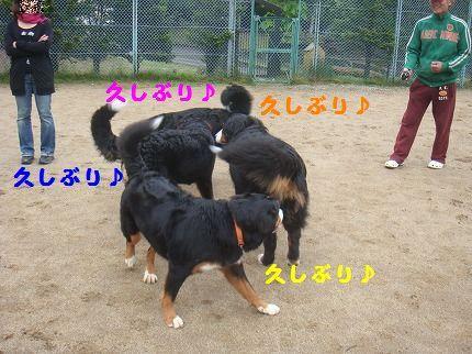 hisashibu.jpg