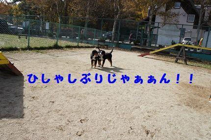 hisyashi.jpg