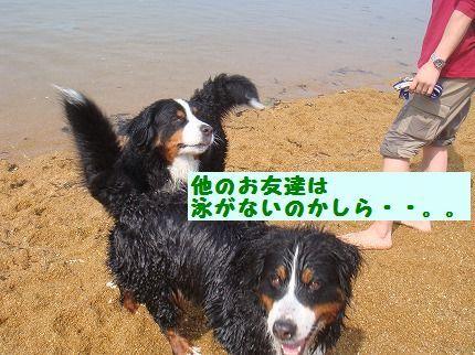 hokanooto.jpg