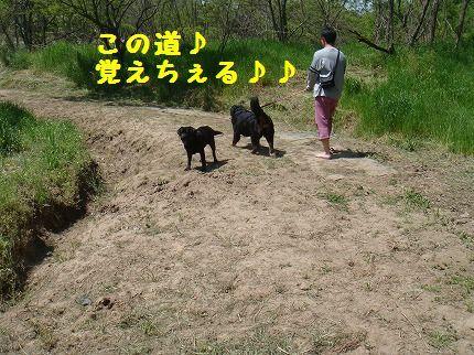konomichi.jpg