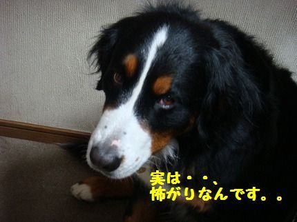 kowagari.jpg