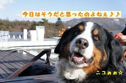 kyouhasou.jpg