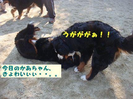 kyowai.jpg