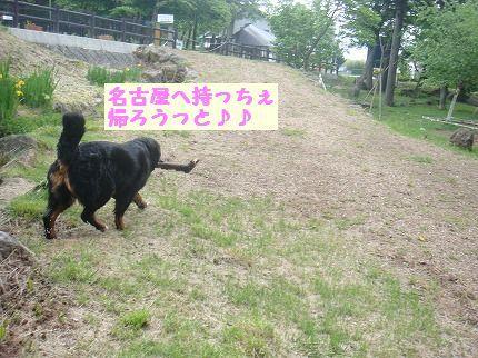 nagoyahe.jpg