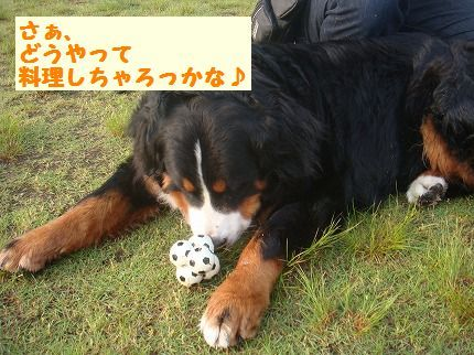 ryouri.jpg