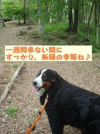 shinryo.jpg