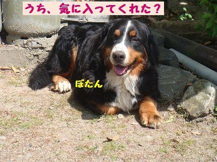 uchiki.jpg