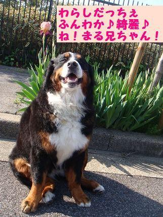 warashida.jpg