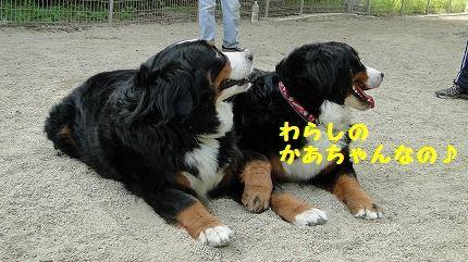 warashika.jpg