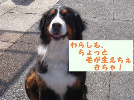 warashimo.jpg