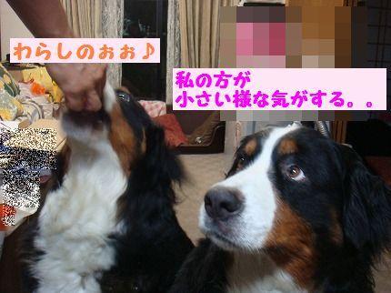 warashinoooo.jpg