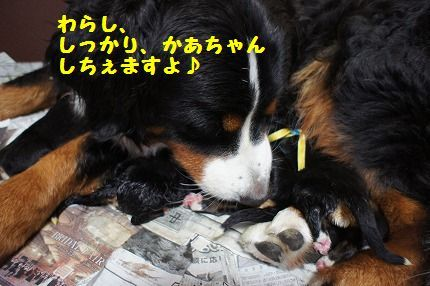 warashishi.jpg
