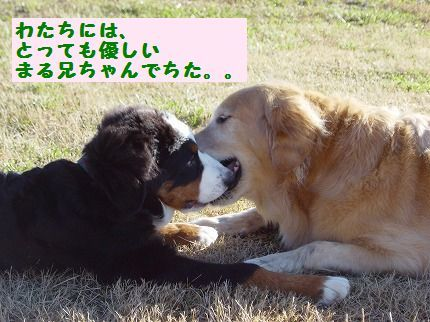 yasashi.jpg