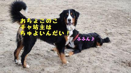 ocyoko.jpg